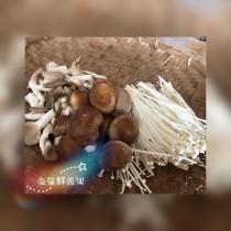 小小菇菇家族(含有3種菇類)