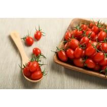 溫室小番茄-600克重